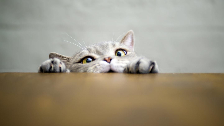 Dobrá a pevná kočička