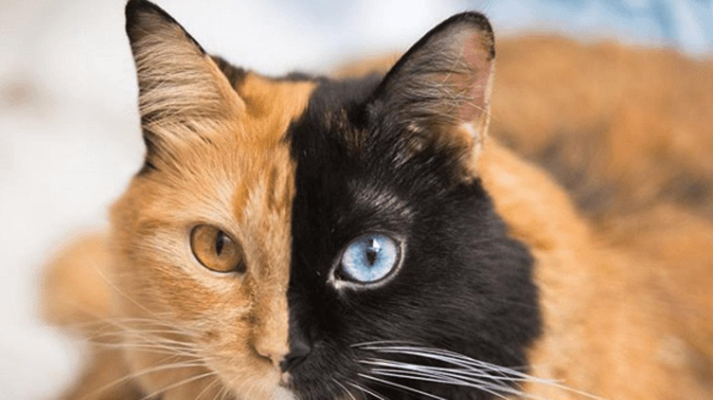 Černá kočička galerie