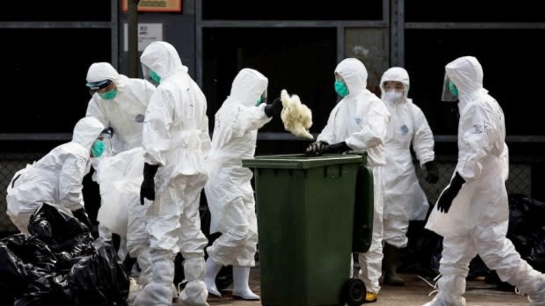 Hongkong obchází stín ptačí chřipky. Místní úřady zlikvidují 20 tisíc kusů drůbeže