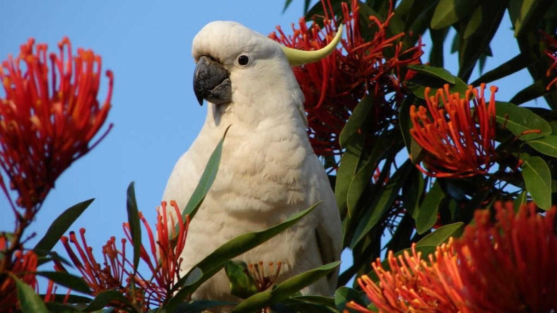 ženy dávají přednost velkým ptákům