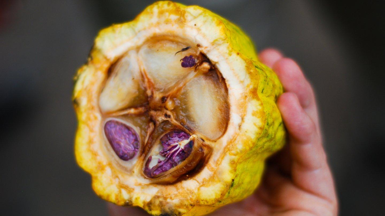 Kakaový bob byl v mexickými indiány považován za symbol plodnosti FOTO: Flickr.com, autor: EverJean