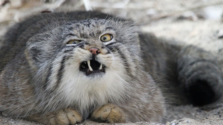 jazyk kurva černá kočička