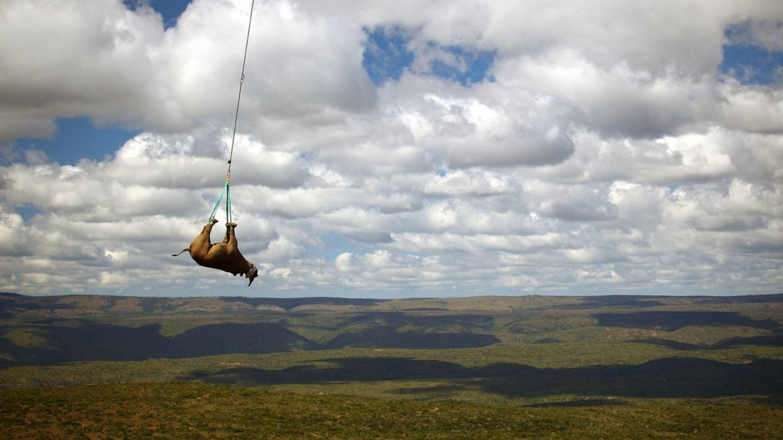 Záchrana nosorožců - Obrázek 3