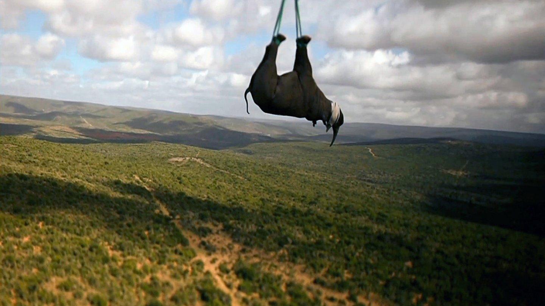 Záchrana nosorožců - Obrázek 4