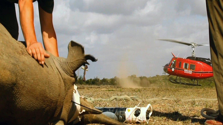 Záchrana nosorožců - Obrázek 2