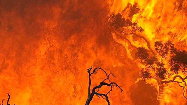 Obří lesní požáry v Indonésii - Obrázek 6