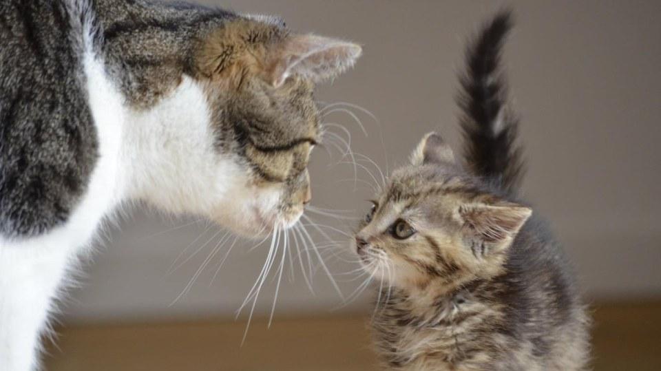 Seznamování koček je věda