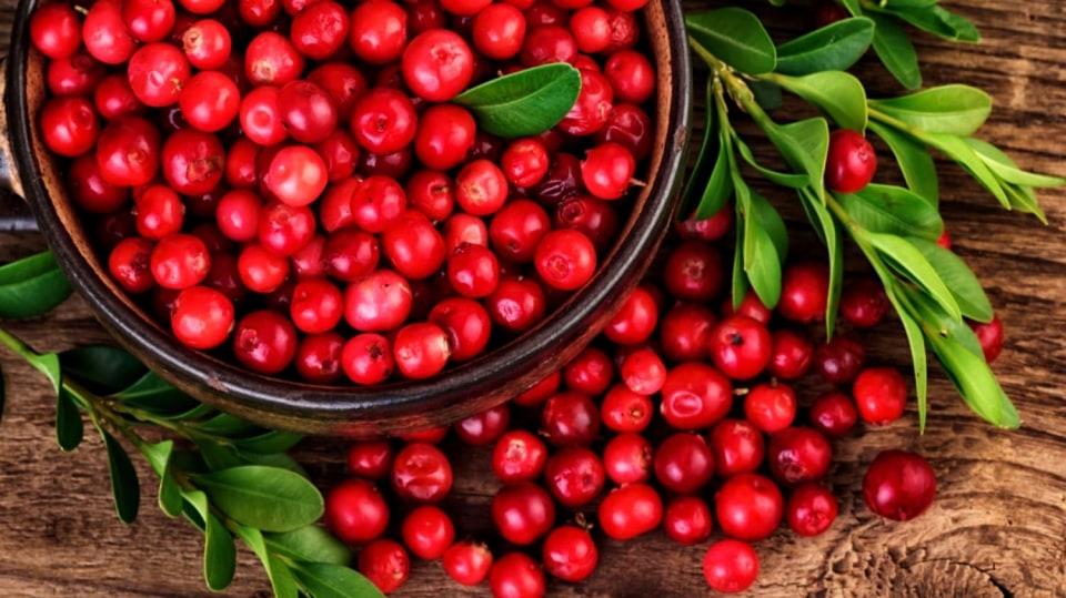 Brusnice brusinka patří k bylinám, u kterých se využívají plody i listy