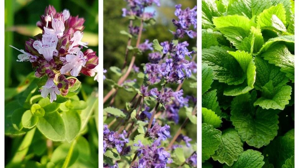 Přírodní antidepresiva: Znáte tři nejvoňavější bylinky proti stresu?