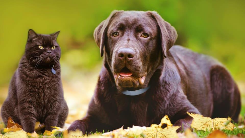 Jak ochránit pejska a kočičku před škrkavkami a spol 1
