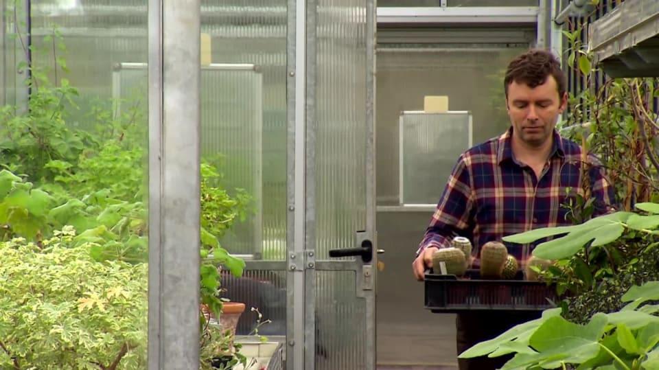 Jak probudit na jaře kaktusy
