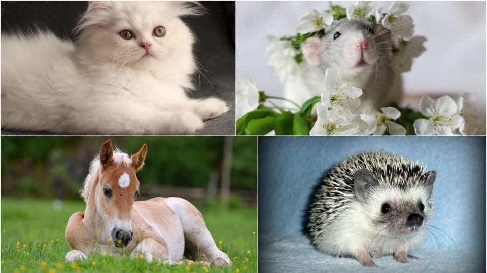 Kam na výlet: Jarní výlety za zvířátky se budou líbit nejen dětem