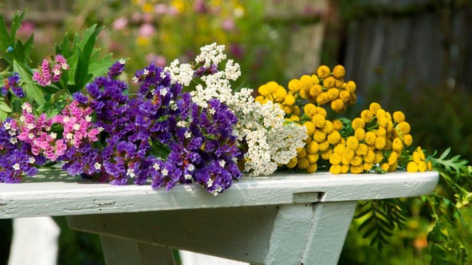 Jak nejlépe usušit květiny: Jde to i v mikrovlnce a ve vodě! 3
