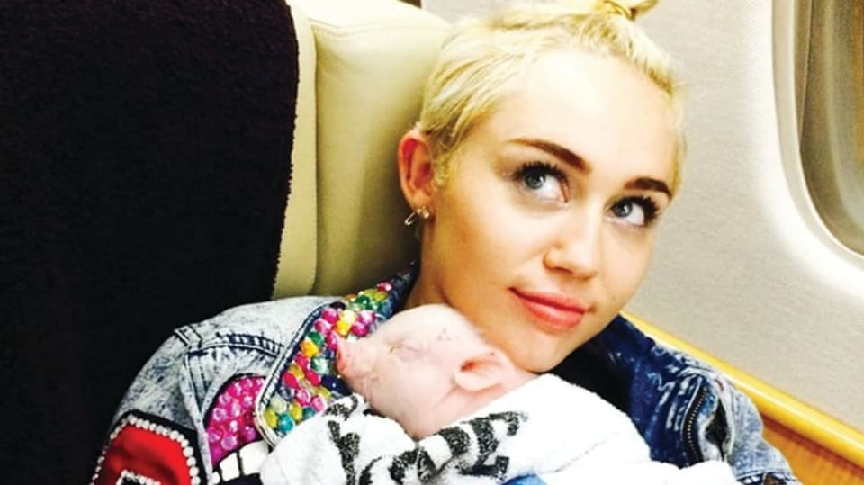 Miley Cyrus se svým prasátkem