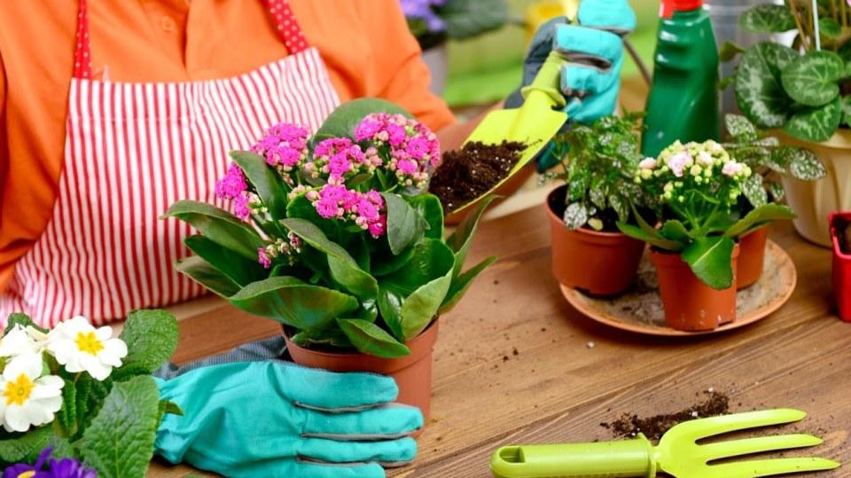 Pokojové rostliny potřebují na jaře přesadit. Poradíme vám, jak na to