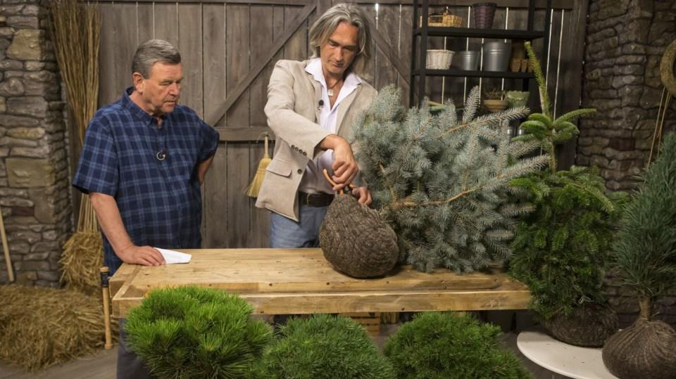 Výsadba dřevin má svá pravidla aneb Co vysazovat na podzim a co na jaře 3