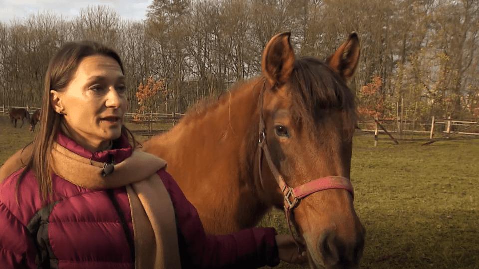 Péče o koně je důležitá