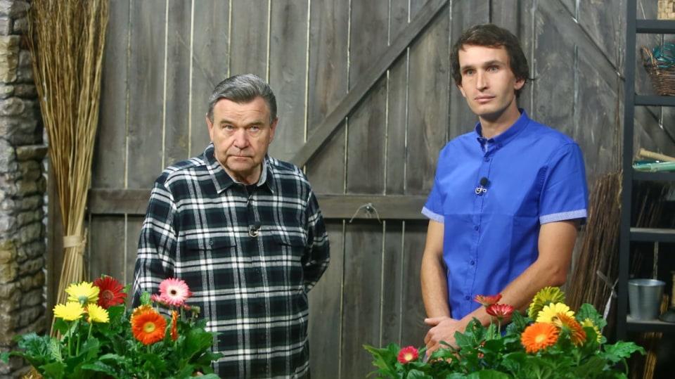 Barevné gerbery: Marnivé krásky v květináči 2