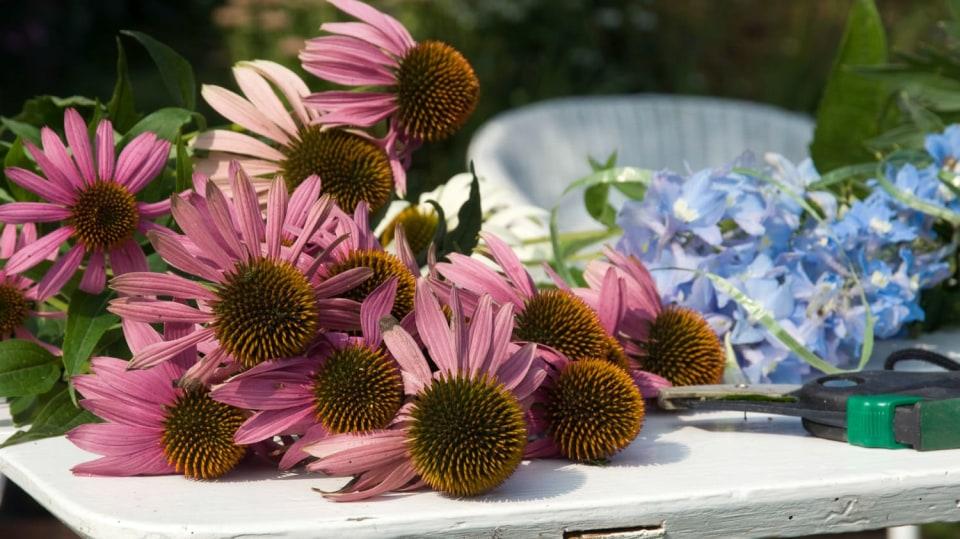 Třapatky si uchovejte do zimních suchých kytic: Otrhejte jim sukničku! 5