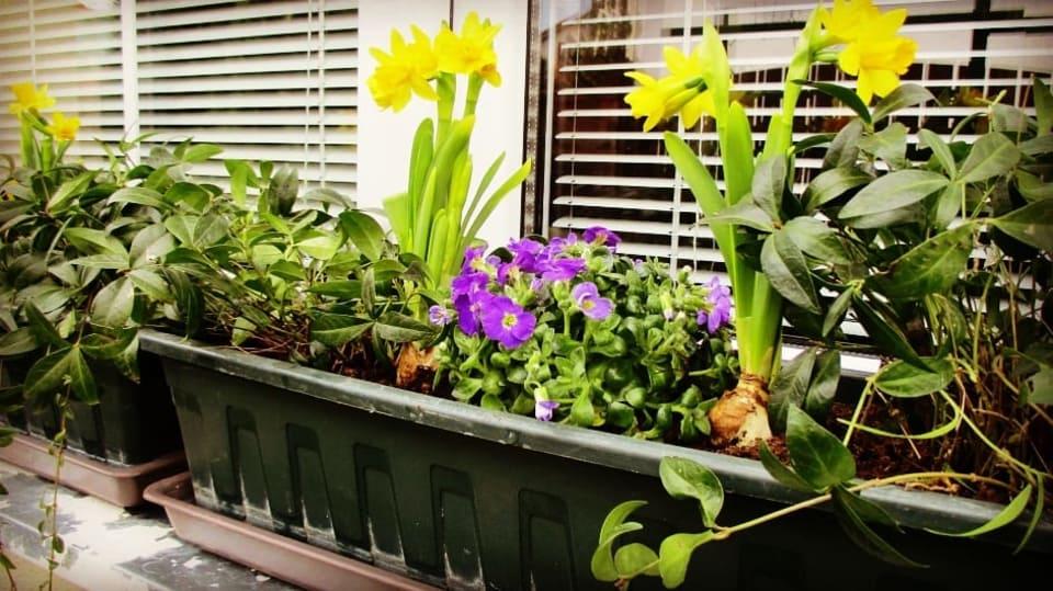 Jak si udělat svěží květinový truhlík aneb jaro je tady