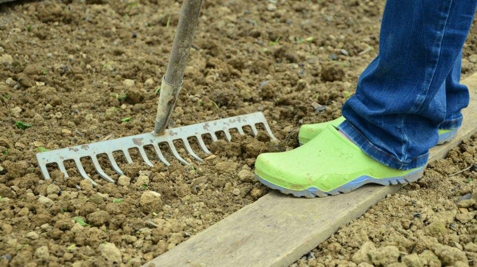 Kalendář pro zahradníky: Březen 6
