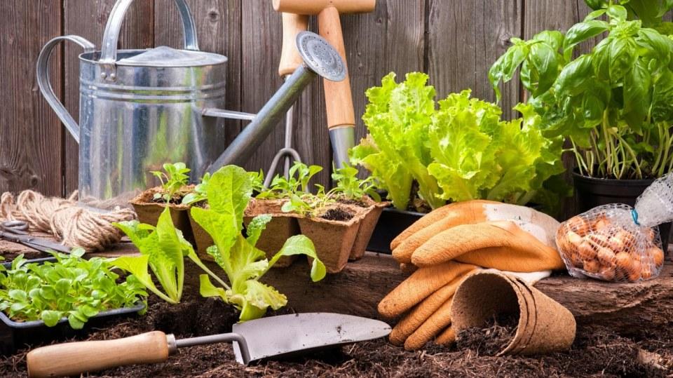 Jaro na zahradě bez chemie: Dusíkaté vápno nastartuje růst a zahubí plevel i slimáky