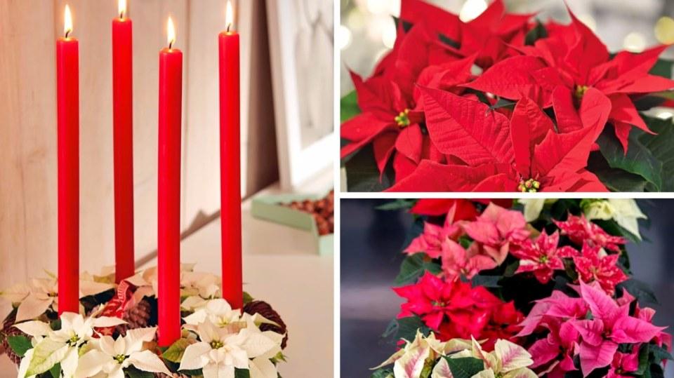 Adventní věnec ze staré formy a vánočních hvězd