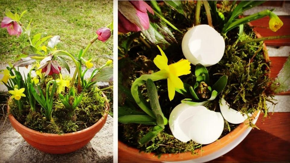 Jak si udělat minizahrádku aneb dopřejte si jarní květinový doping