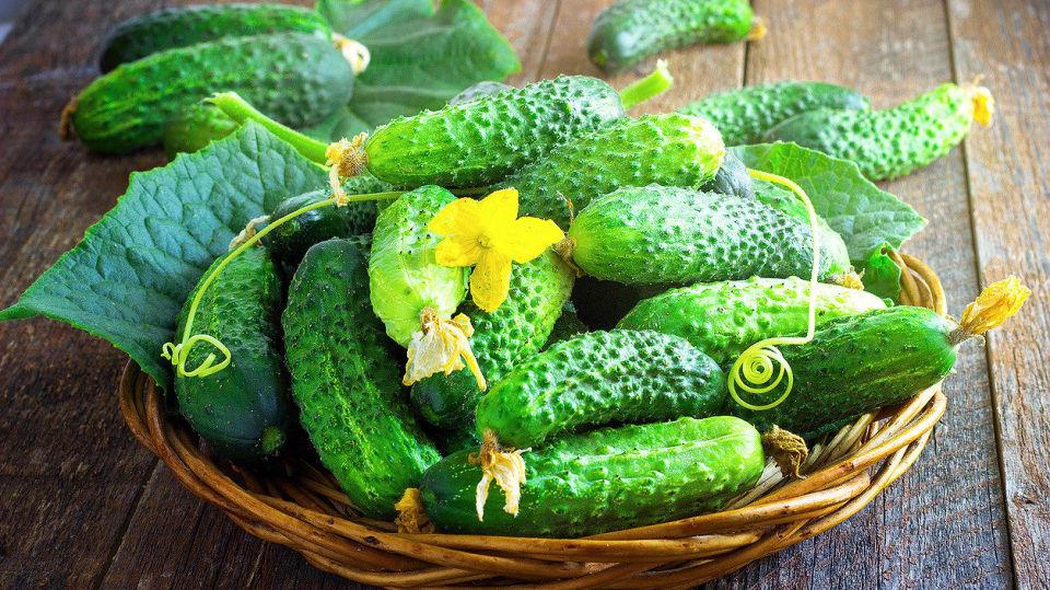 Jak pěstovat okurky:  1