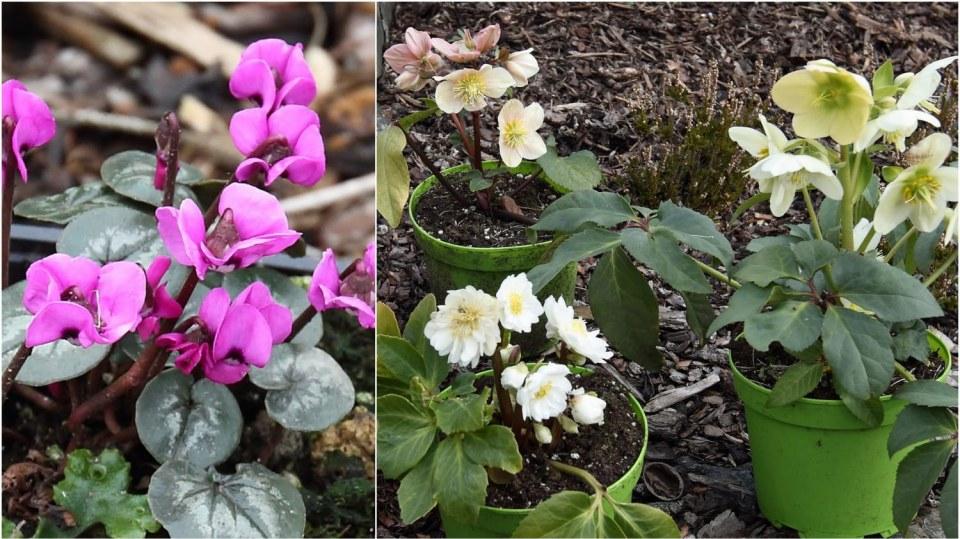 Zářivé květy předjaří