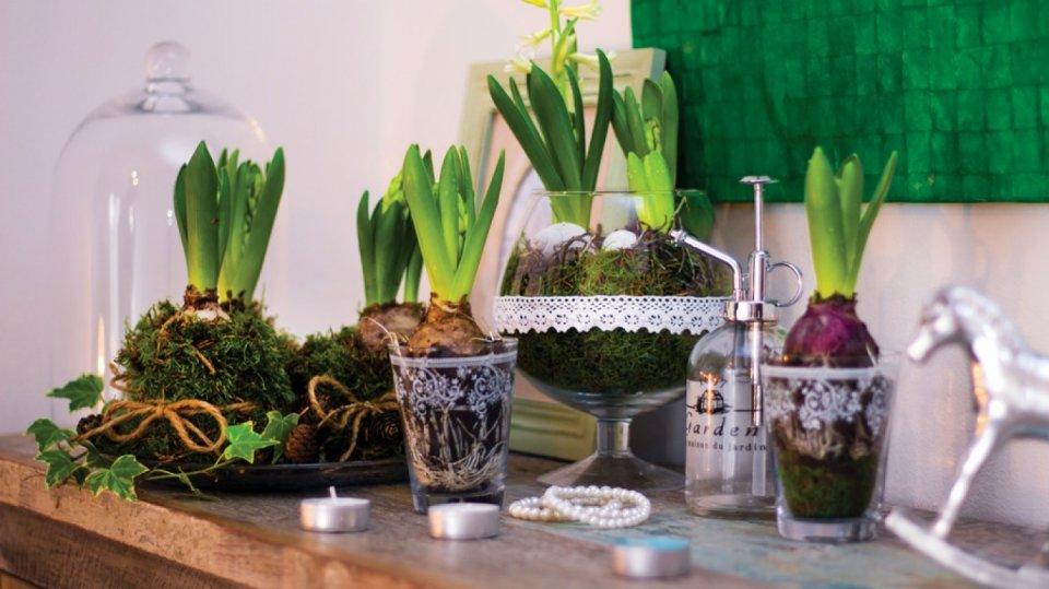 Jarní aranžmá s narašenými hyacinty