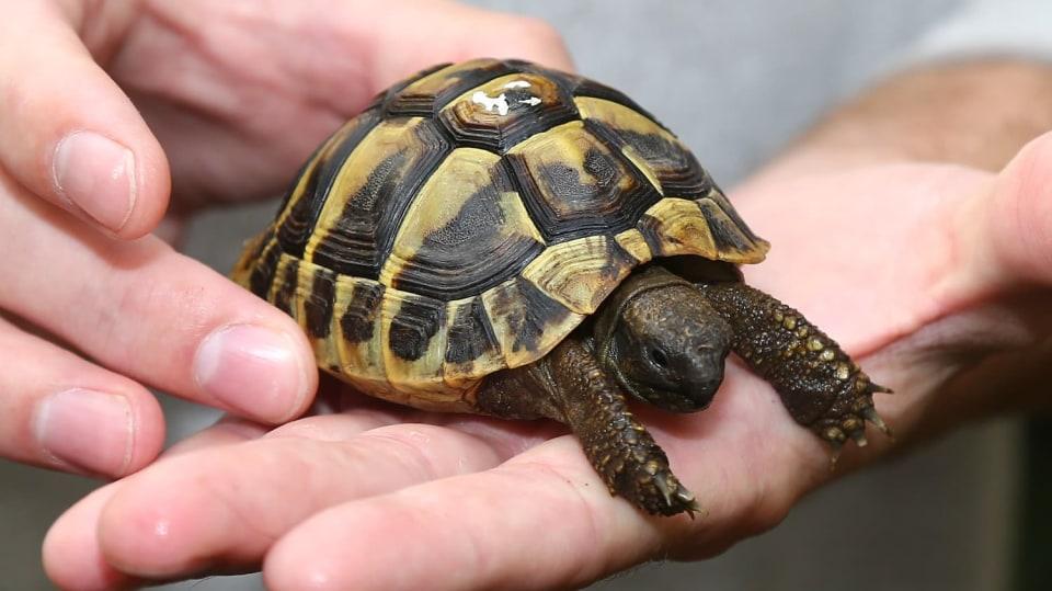 Želvičky jako domácí mazlíčci