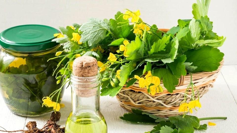 Jaký je nejlepší přírodní lék na bradavice a kuří oka? Přece vlaštovičník větší!