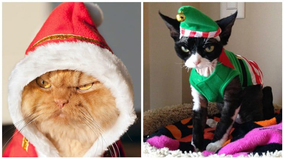 Co je mi do vašich Vánoc?
