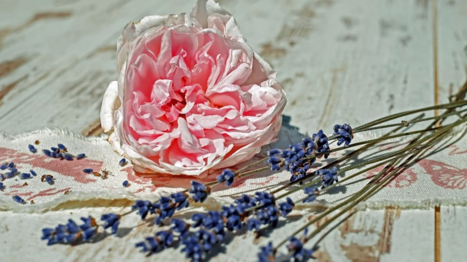 Recept na lásku: bylinná koupel s levandulí a růžovými okvětními plátky