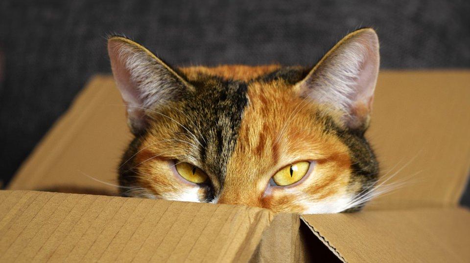 Pelíšku v papírové krabici žádná kočka neodolá!