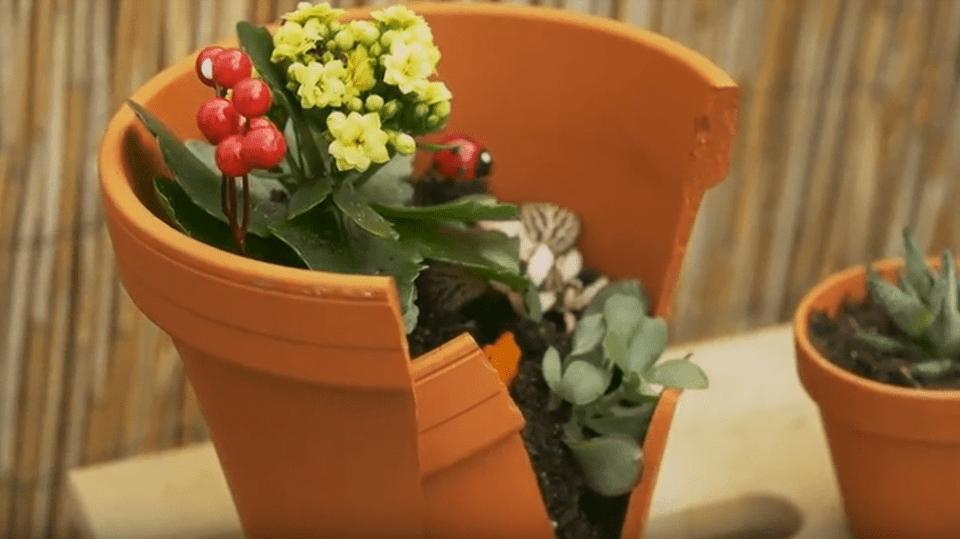 Rozbitý květináč jako minizahrádka