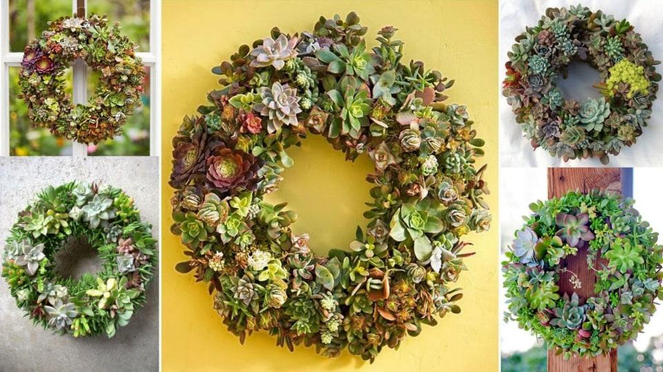 Věnce se sukulenty: Živá dekorace na vstupní dveře či na zahradní sůl