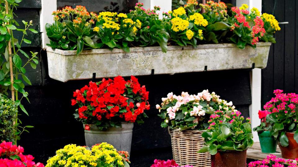 Jak můžete vyzdobit balkon méně tradičními květinami 1