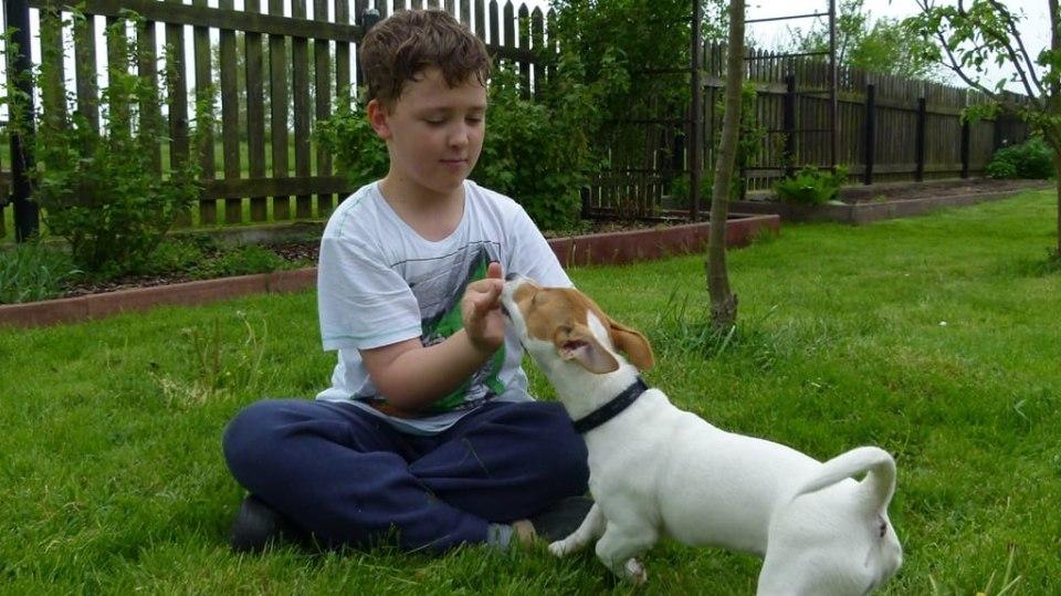 Výchova psa aneb Pět zásad pro základní výcvik čtyřnohého přítele 5