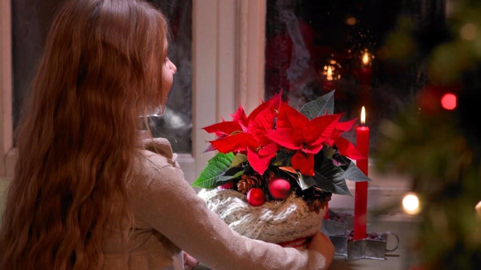 Co dělat s vánoční hvězdou, aby byla celé Vánoce krásná