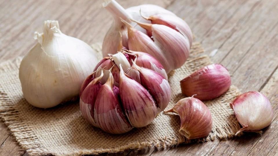 Česnek kuchyňský (Allium sativum)