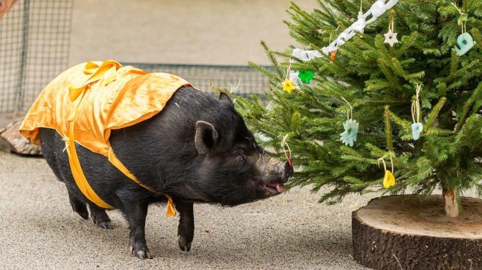 Vánoce v Zoo Praha