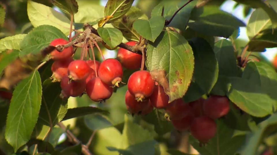 Podzimní plody 4