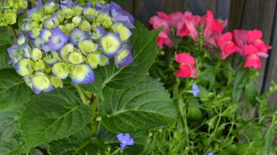Jak pěstovat na balkoně květiny, i když se vám v tom alergie snaží zabránit 1