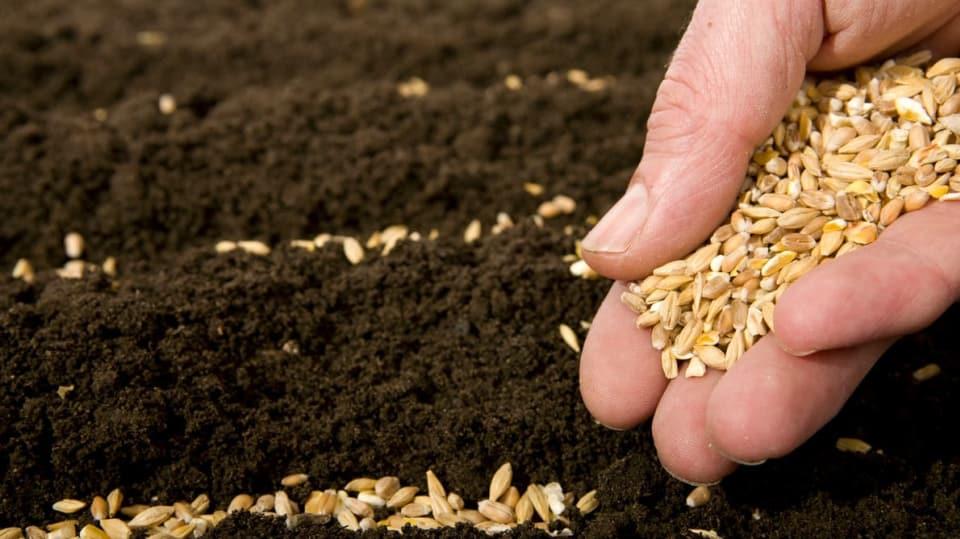 Co se píše o semínku na sáčku  1