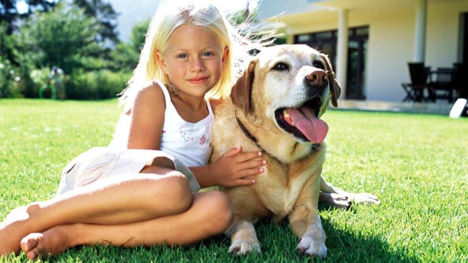 Jak chránit svého psa před komáry 1