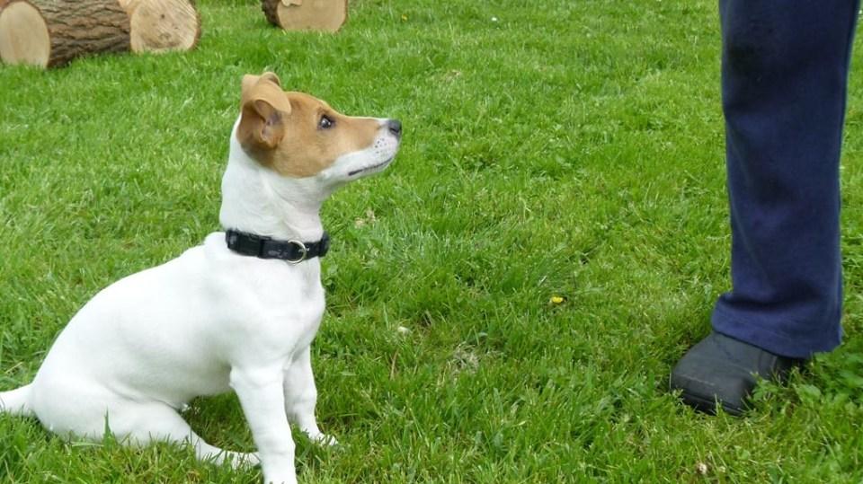 Výchova psa aneb Pět zásad pro základní výcvik čtyřnohého přítele 2