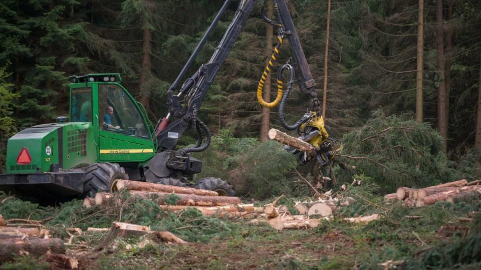 Strom dokáže harvestor naporcovat doslova za pár sekund. 3
