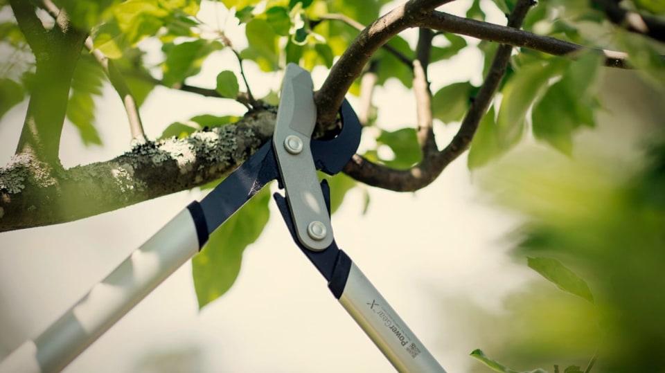 Jak vyzrát na jarní prořez dřevin: péče o ovocné stromy, okrasné keře a živé ploty